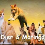 Application Moringa Oleifera for Animals