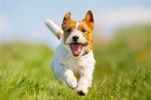 Benefits of Moringa Oleifera for Animals