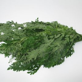 Vers Moringa blad - Moringa Oleifera