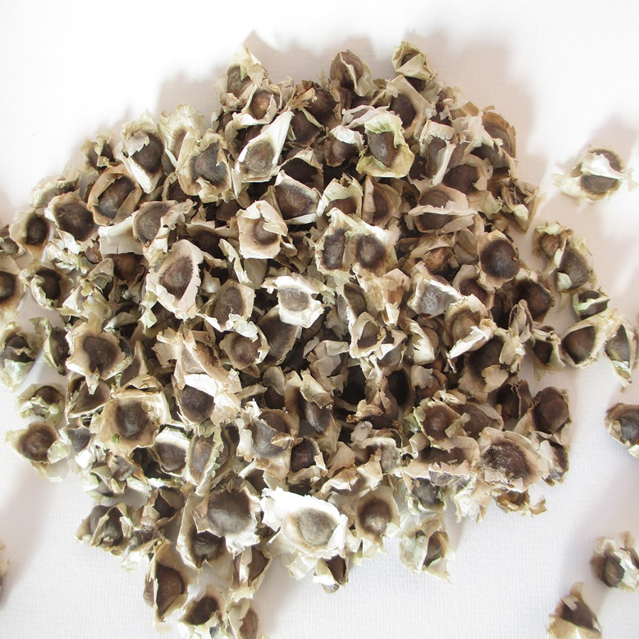 Moringa Seeds 100 grams (ca  300 seeds)