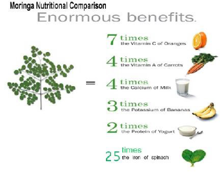 Benefits Moringa Oleifera