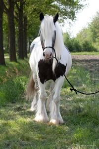Donna, 20 years. Moringa & Horses