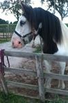 May, 6 years. Moringa benefits for Horses