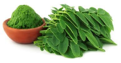 Moringa Blattpulver-2- Moringa Oleifera Deutschland